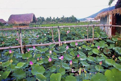 Khu đầm nằm trên tuyến đường từ trung tâm ra sân bay Cam Ranh.
